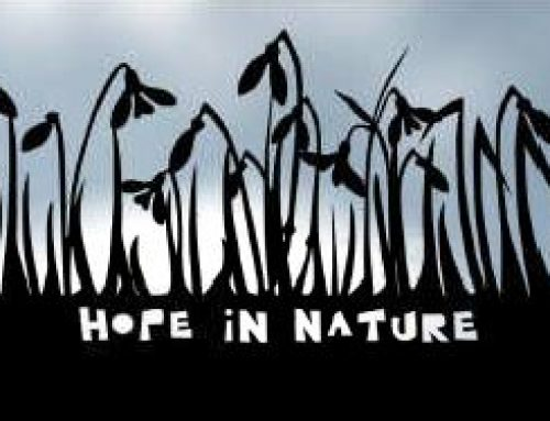 Hope in Nature – Snowdrop Festival Challenge